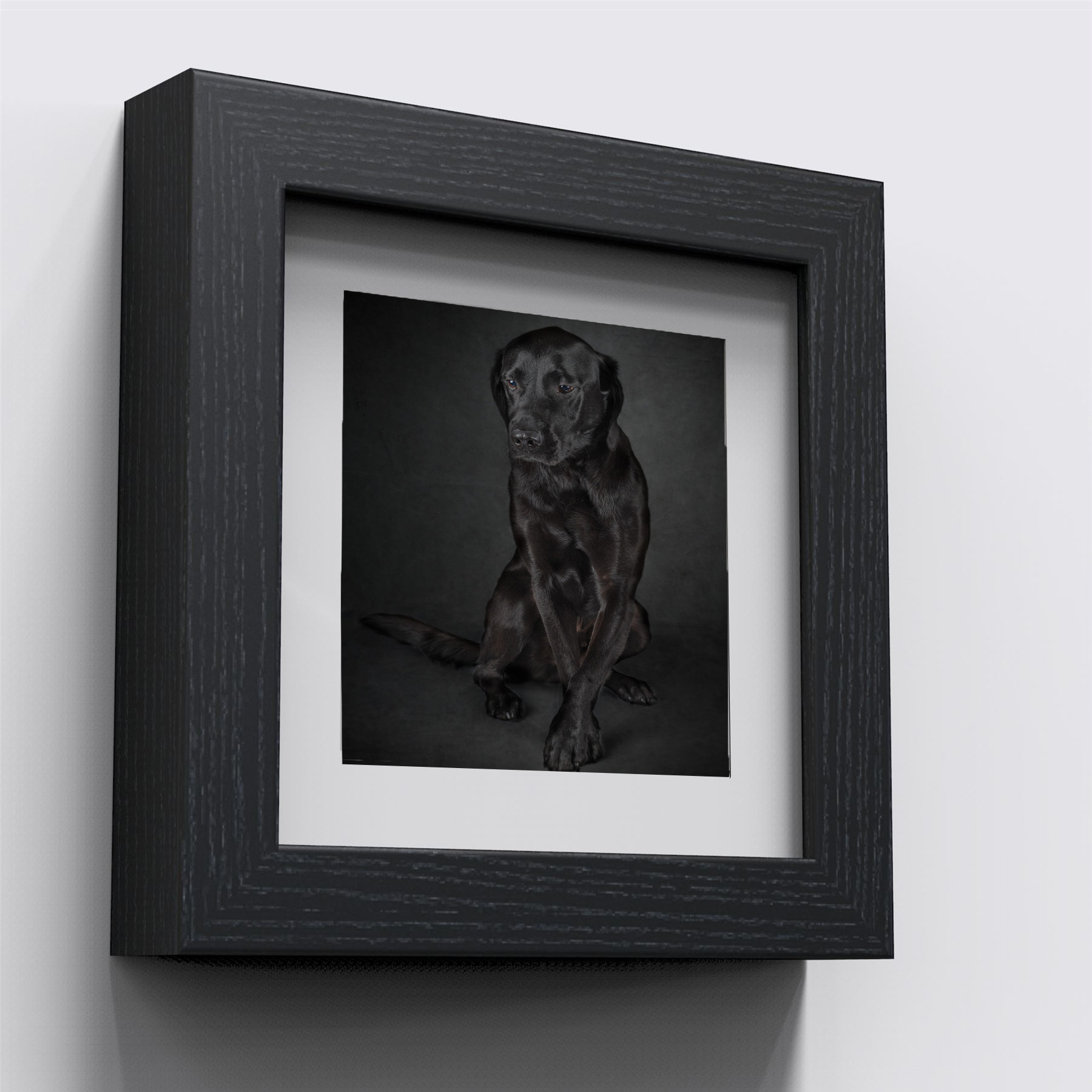 dog in frame.jpg