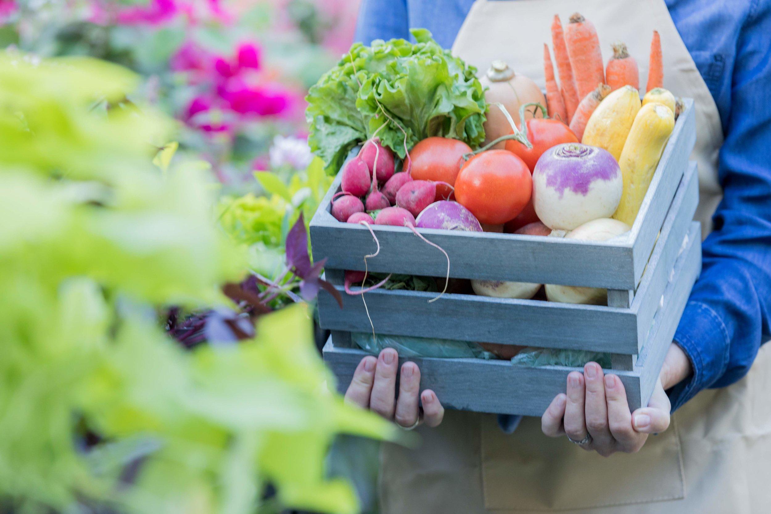 Unrecognizable-woman-holds-basket-of-fresh-veggies-904696968_6720x4480.jpg