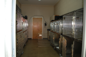 kennels-300x200.png