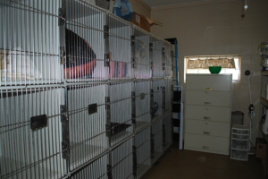 cat-kennels-300x200.png
