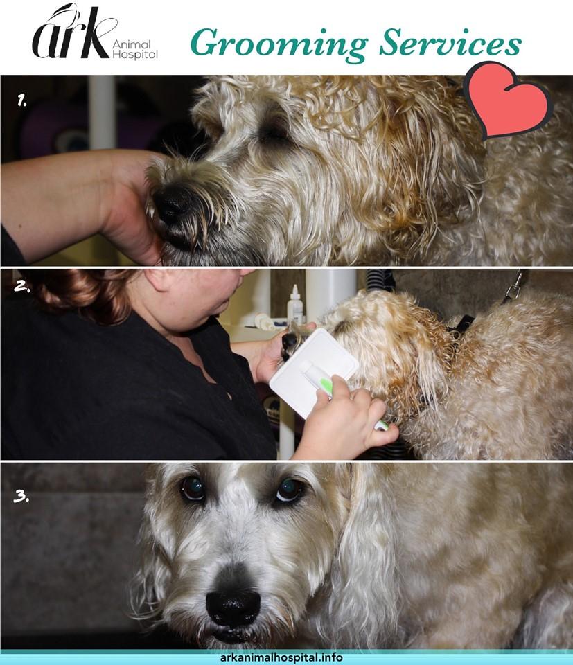 grooming - fb.jpg