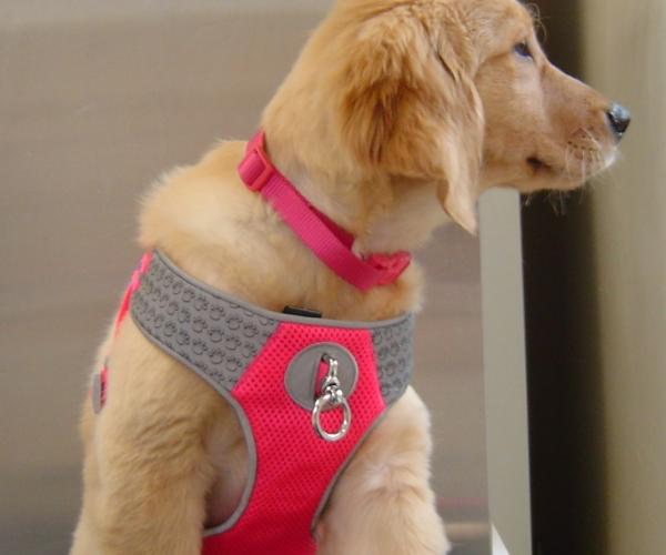 wellness-pup.jpg