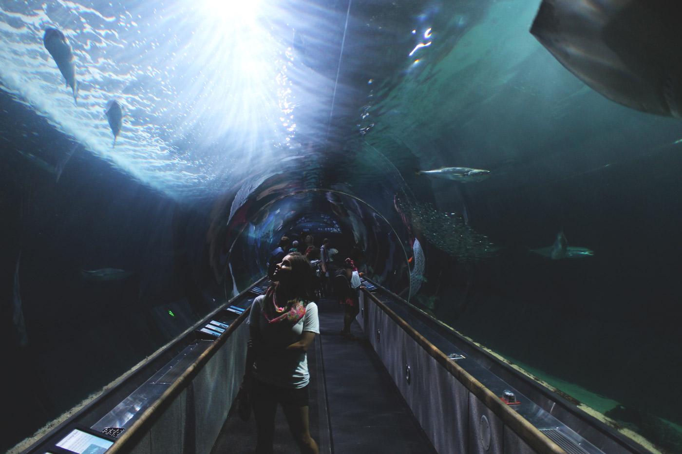 Underwater-tunnel-aquarium.jpg