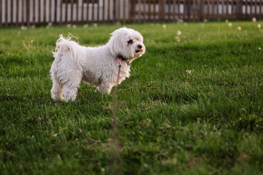 puppy standing in the grass