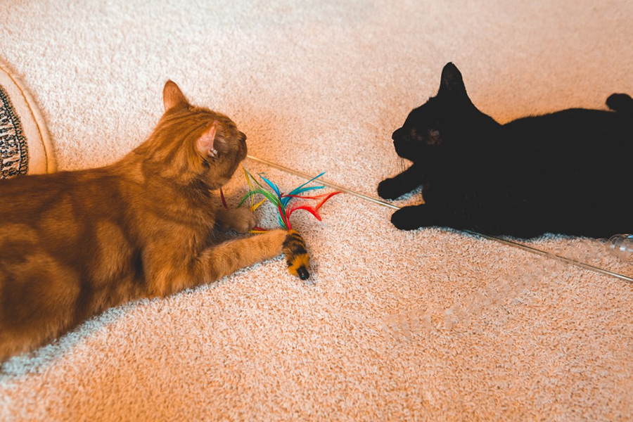 cats playing with a toy