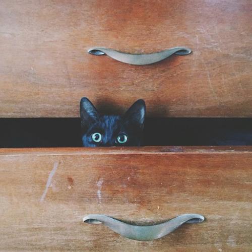 kitten hiding in a drawer