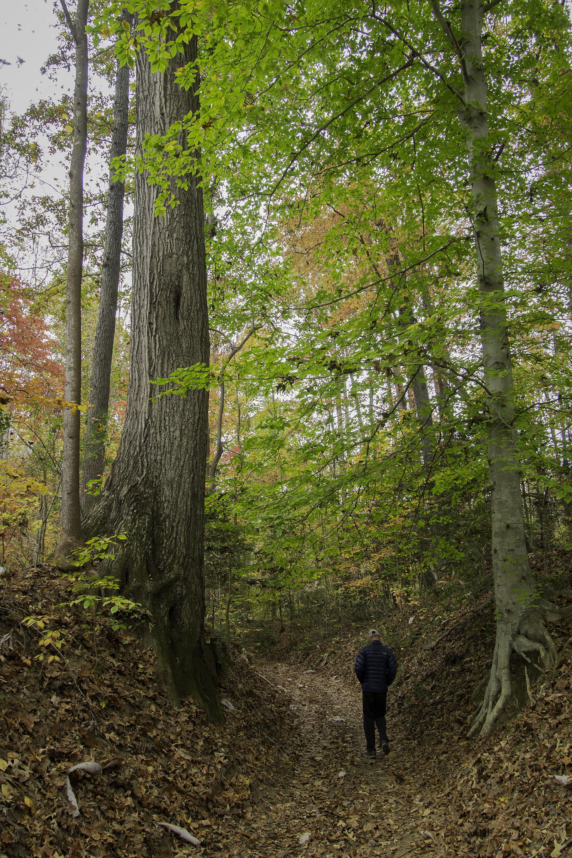 Amy Nason - laurel hill dallas carriage way.jpg