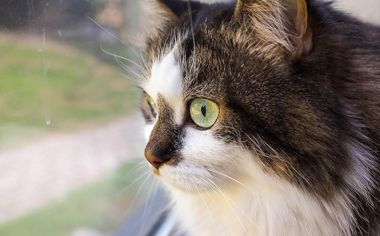 2. Keep Cats Indoors