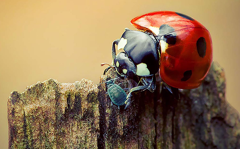 4. Avoid Pesticides