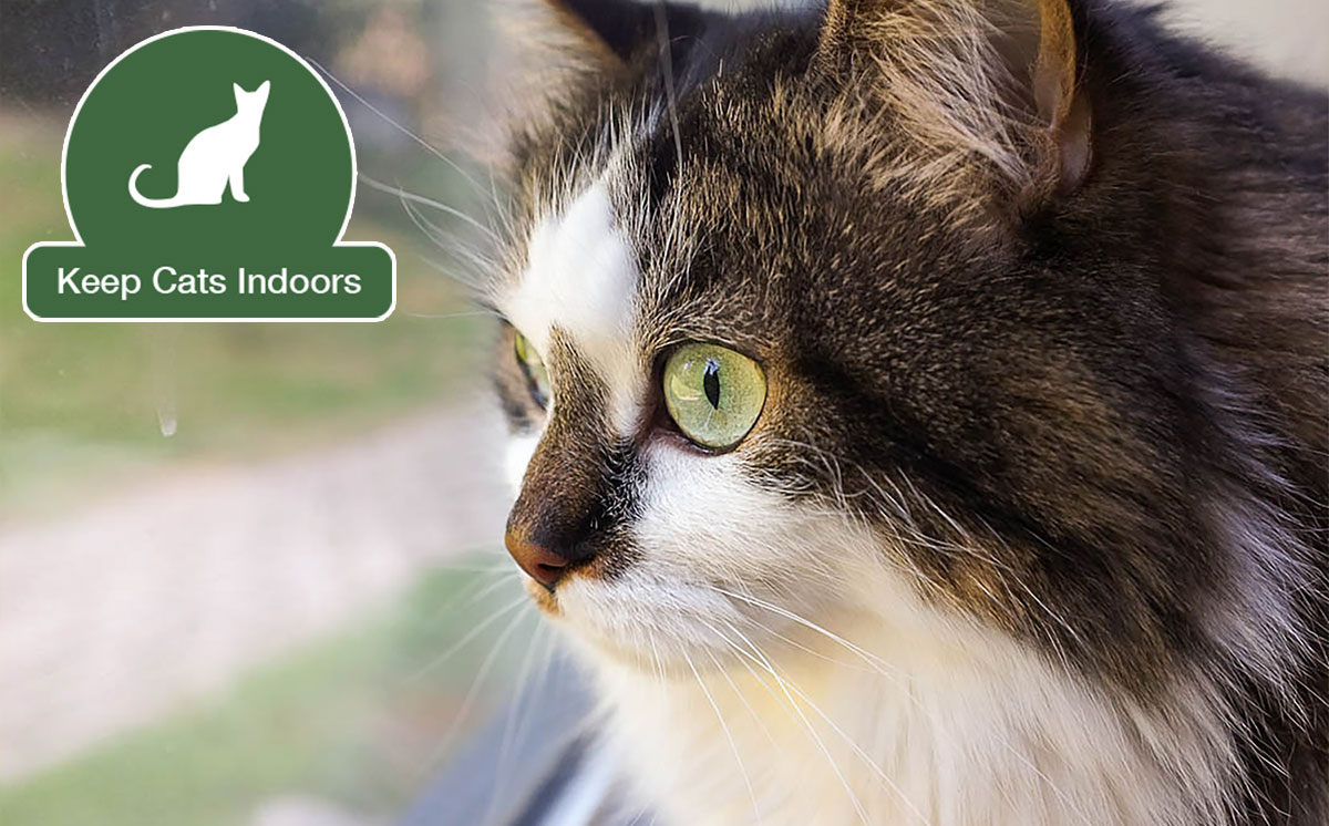 Keep your cat indoors and save cats and birds.  Photo by     Gadio Sevilla     via Creative Commons.