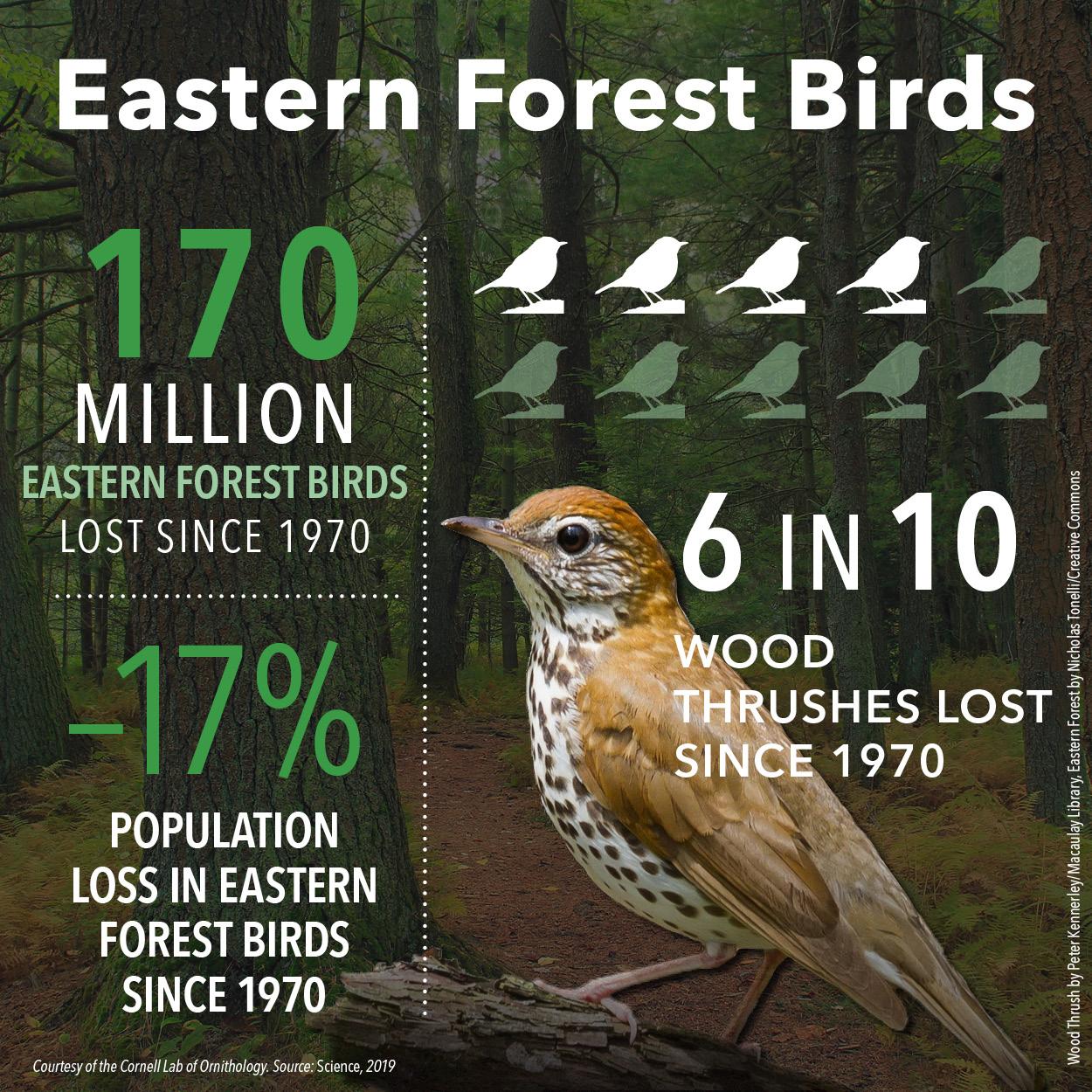 The Vanished Birds Summary