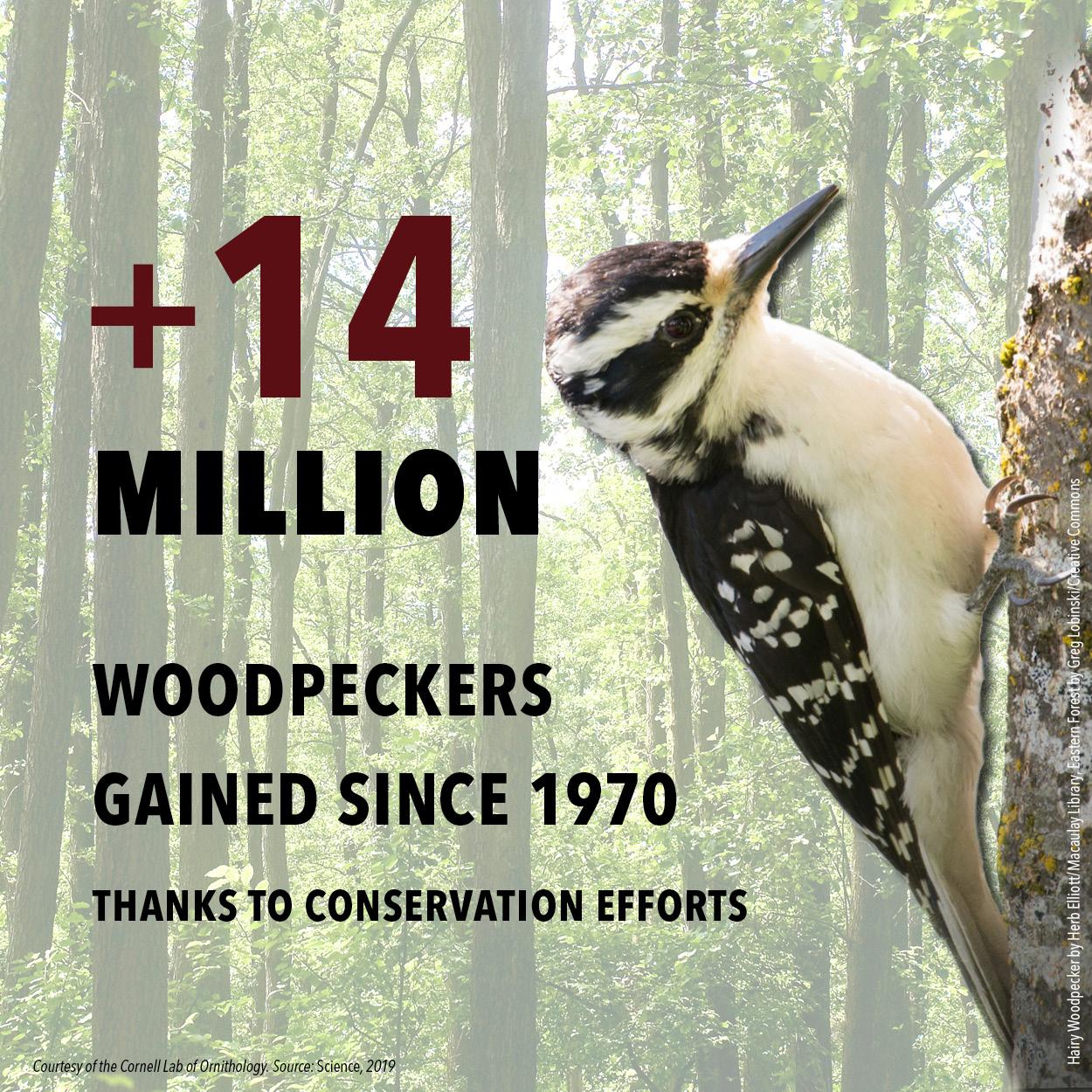 BirdDeclines-gains-woodpeckers.jpg