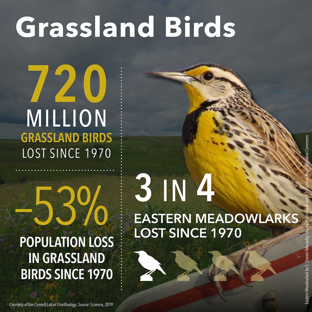 BirdDeclines-grassland-720.jpg