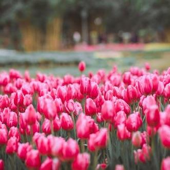 Spring Square.jpg