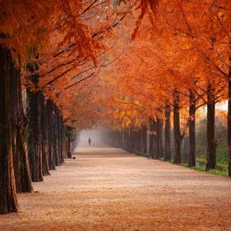 Autumn Square.jpg