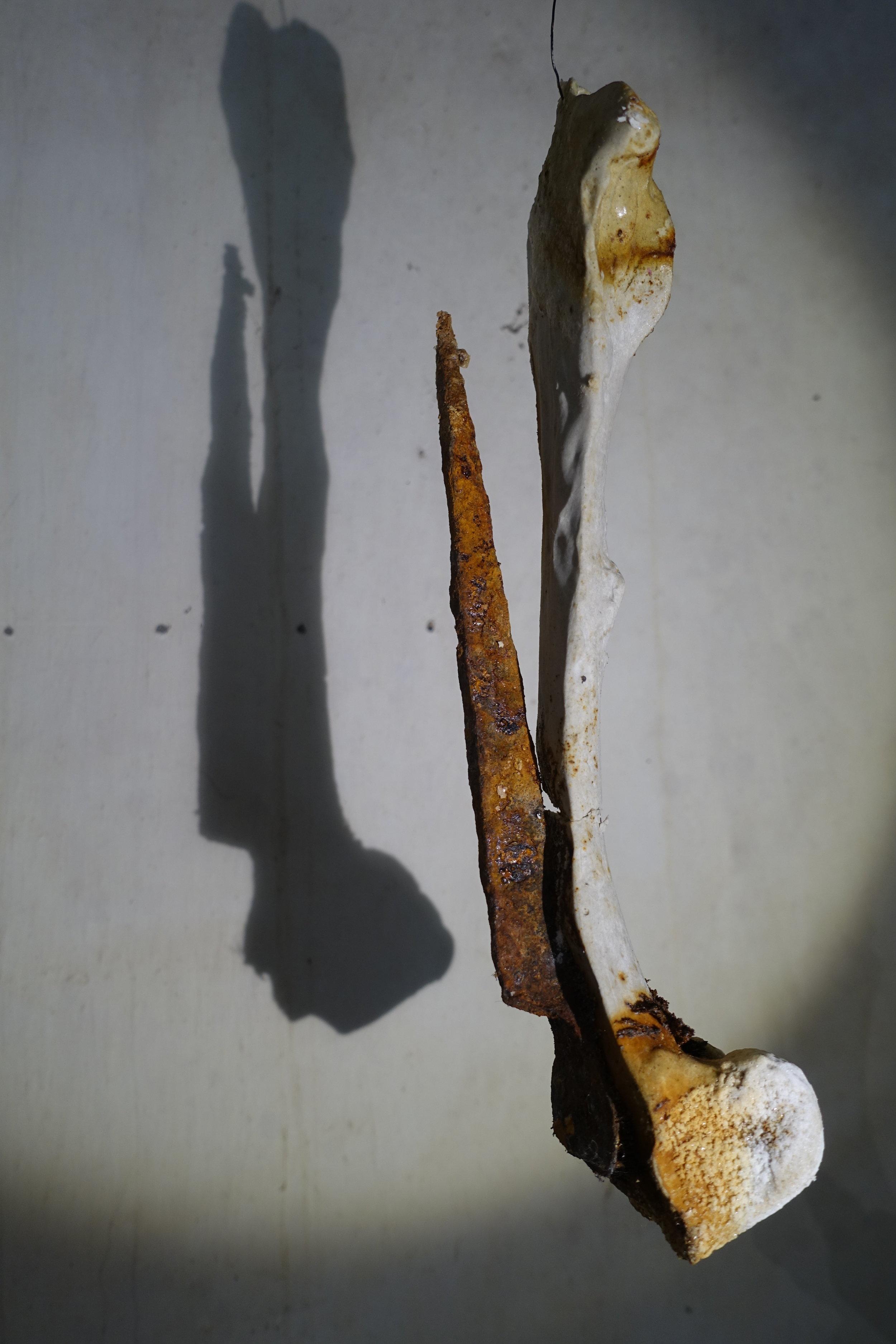 3. Saturation, 2017, kangaroo bone, plaster, iron, salt, dimensions 53cm x 25cm Image Gail Hocking.JPG