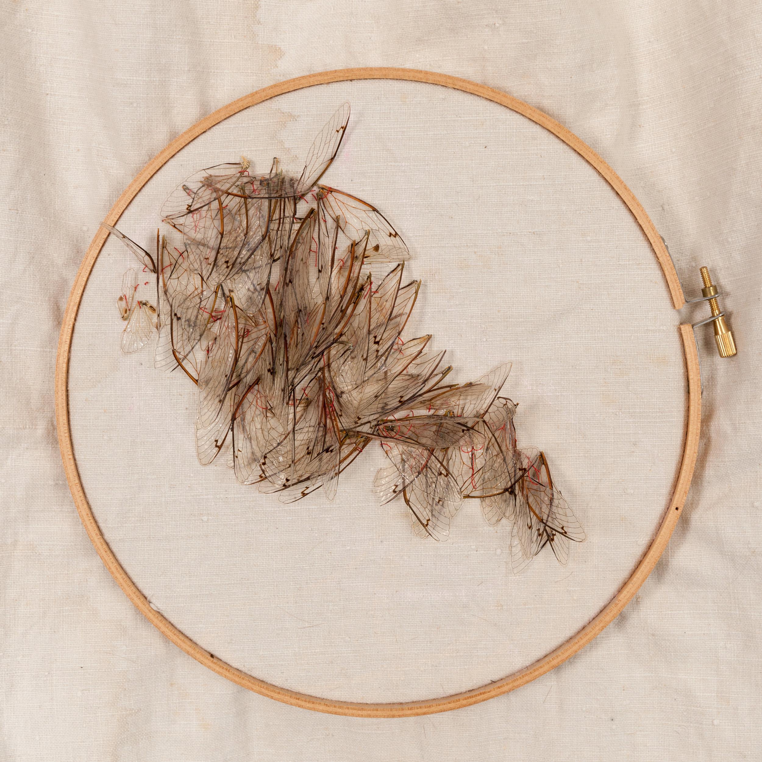 Rapacious Deeds (detail) - Linen, red thread, locust wings, wood frame, dimensions 85cm x 69cm, Image-Nu Image.jpg