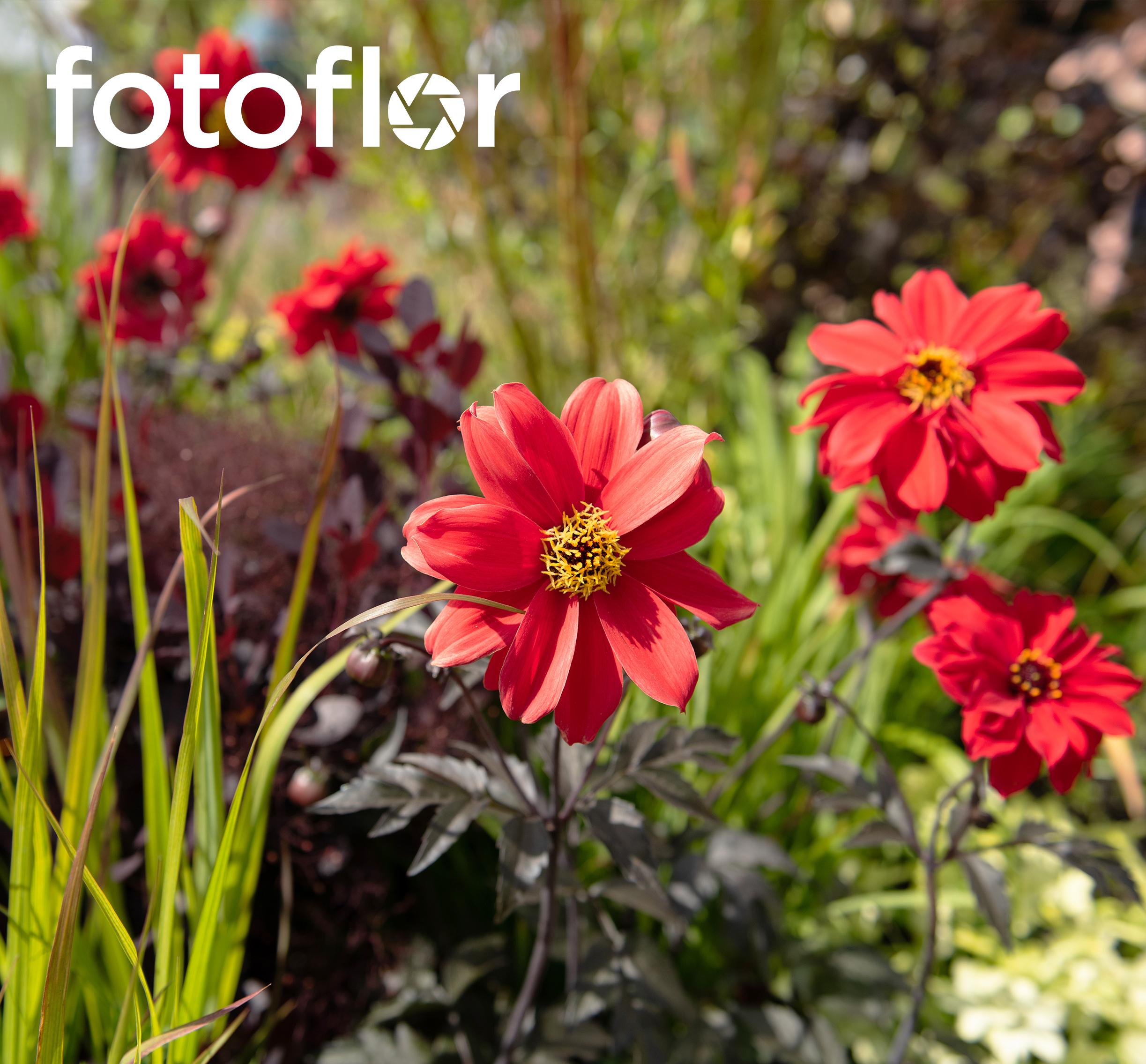 …capturer LA NATURE - trouvez les bonnes images qui répondent à vos besoins dans notre photothèque.