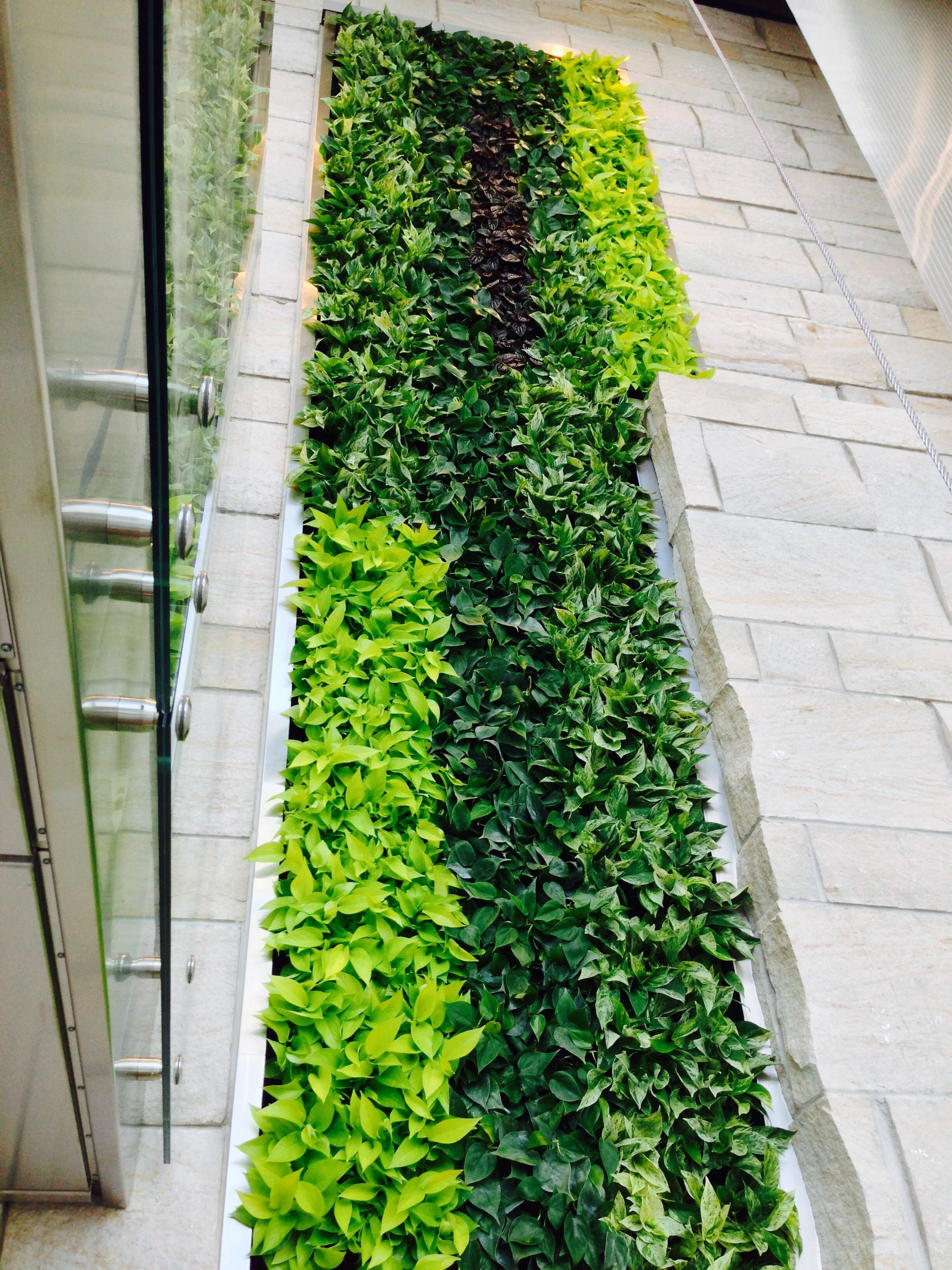 Interior Walls - Our indoor Living Walls are engineered to be an attractive and efficient method to bring the art of nature indoors, providing cleaner air, increased well-being, and more.