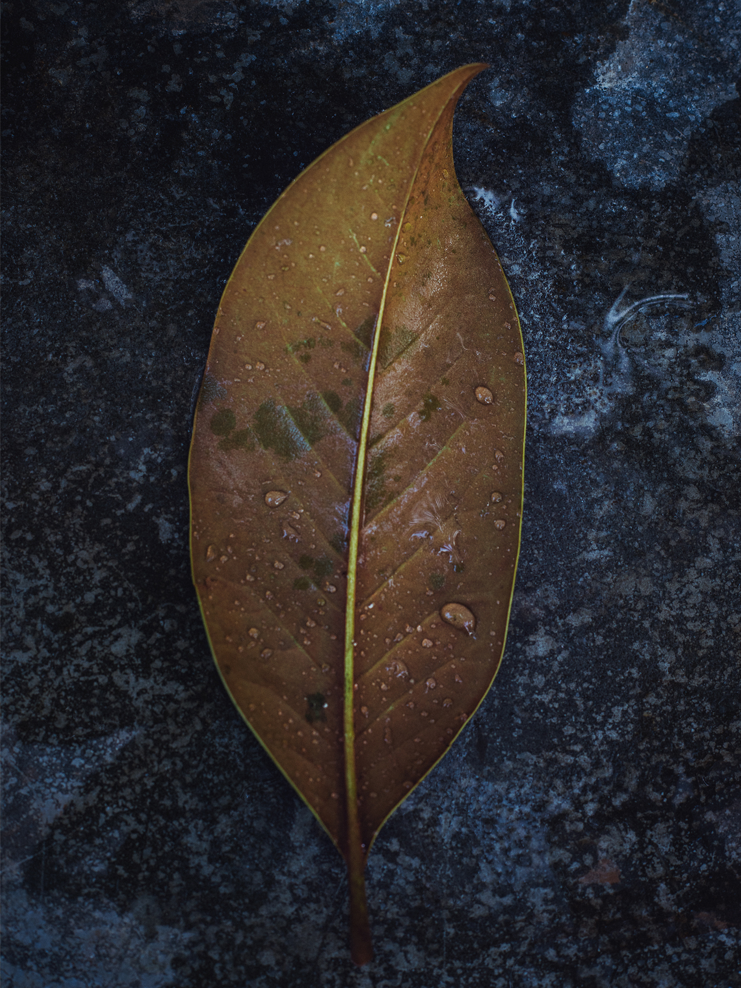 radostina_leaf_with_water_stilllife.jpg