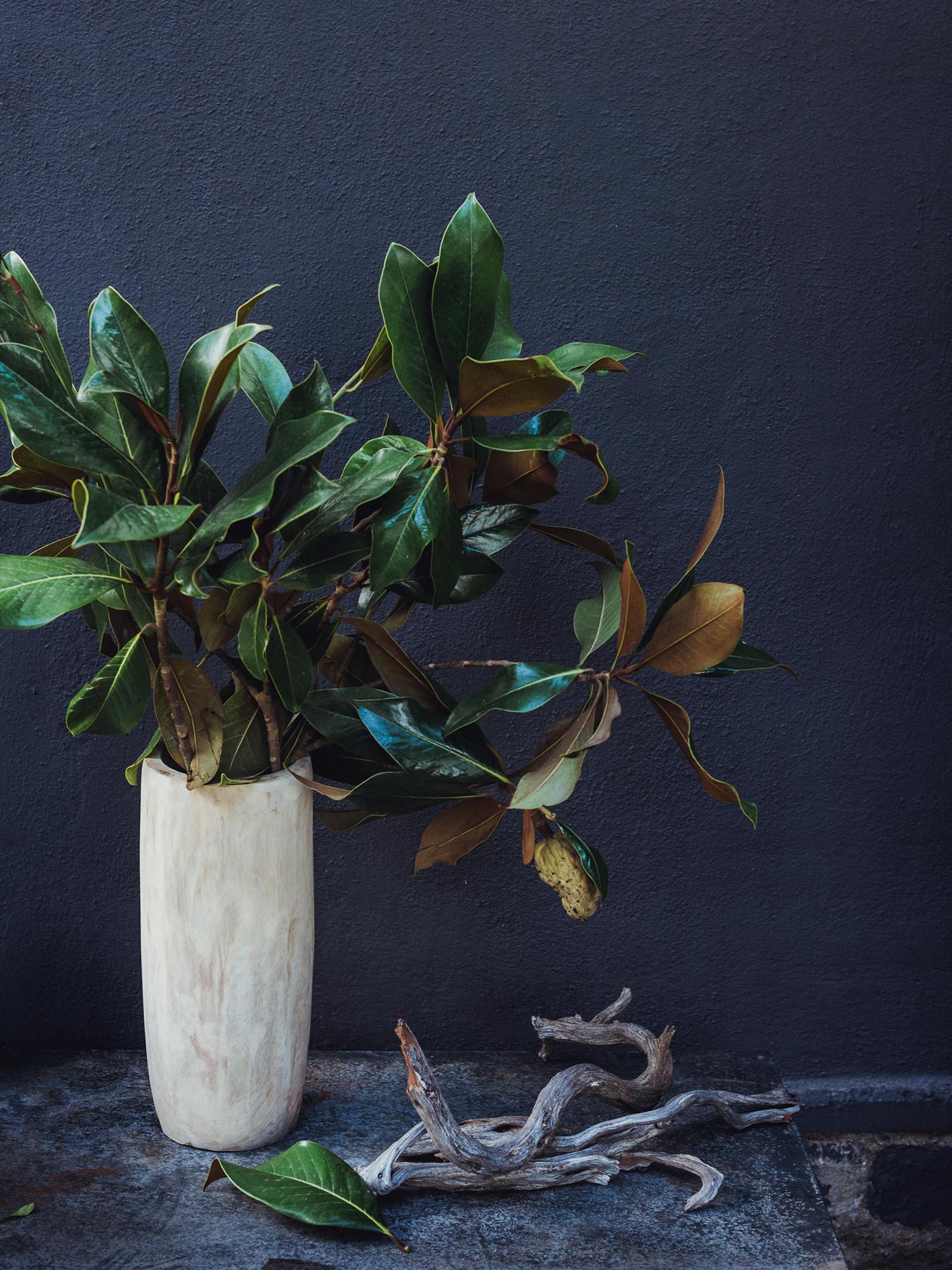 radostinaboseva_barcelona_magnolia.jpg