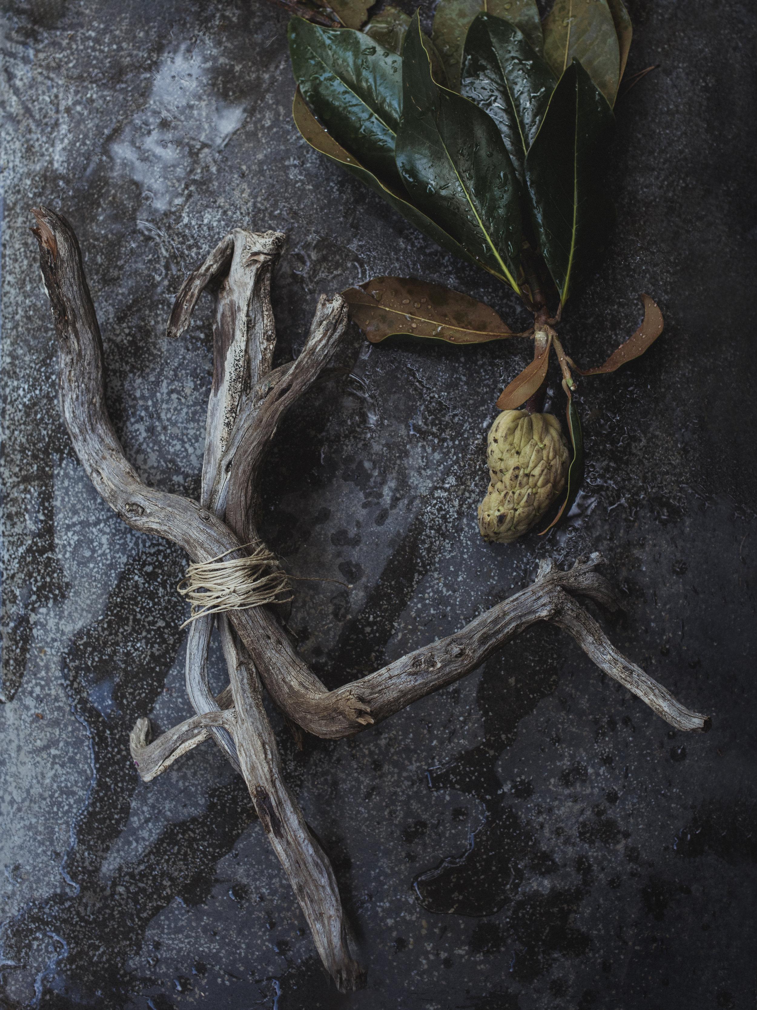 radostinaboseva_magnolia_flat_lay_barcelona_stilllife.jpg