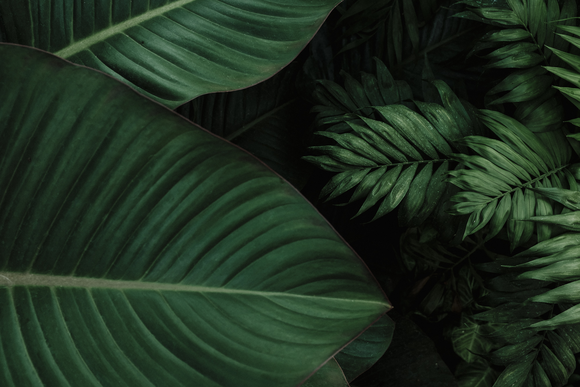 karmen-meyer-photography-tropical-foliage-fine-art-print-9710.jpg