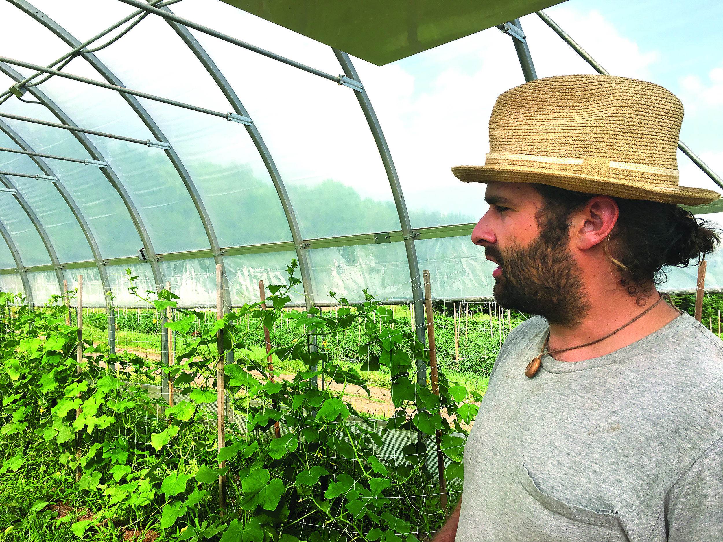 STRIKING A BALANCE  Justin Sutherland looks over vegetables growing in a greenhouse on Somewhere in Time Farm in Parksville. Amy Hines photos