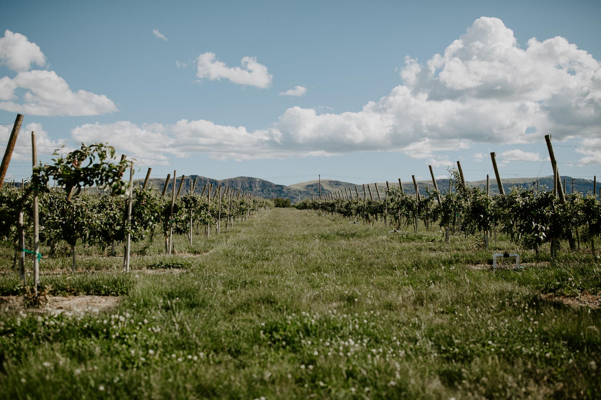 Landscapes of Wenatchee, Washington by Travel Photographer Allie Chambers