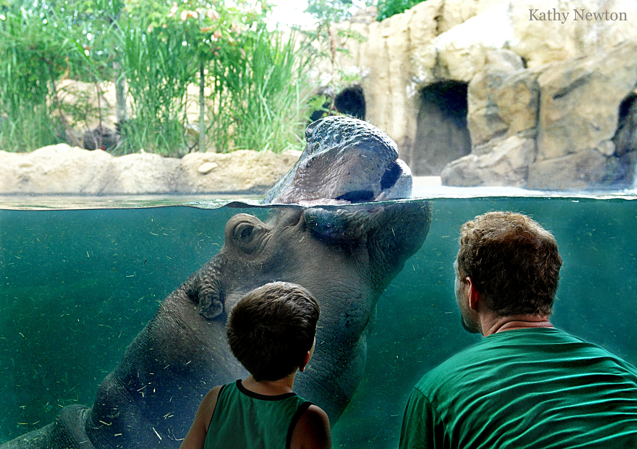Hear the gibbons talking to each other, the splash of waves as Fiona the hippo swims over to say hi, and the chug-a-lug of the Safari Train at  Cincinnati Zoo & Botanical Garden .