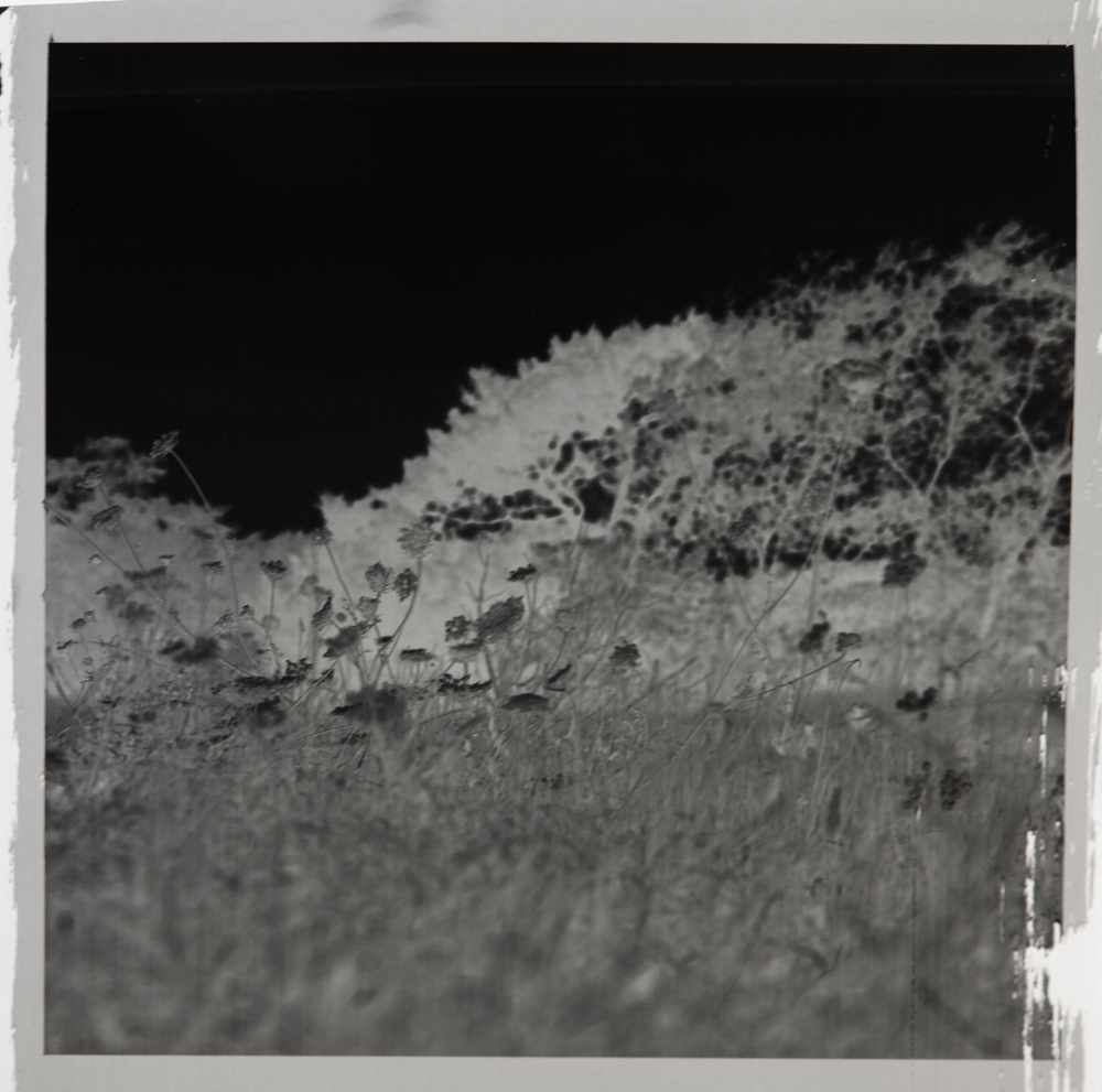 expired ilford fp4 hasselblad degrading