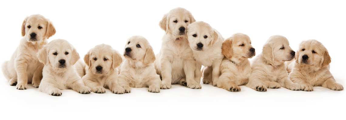 Copy of donation-puppies.jpg