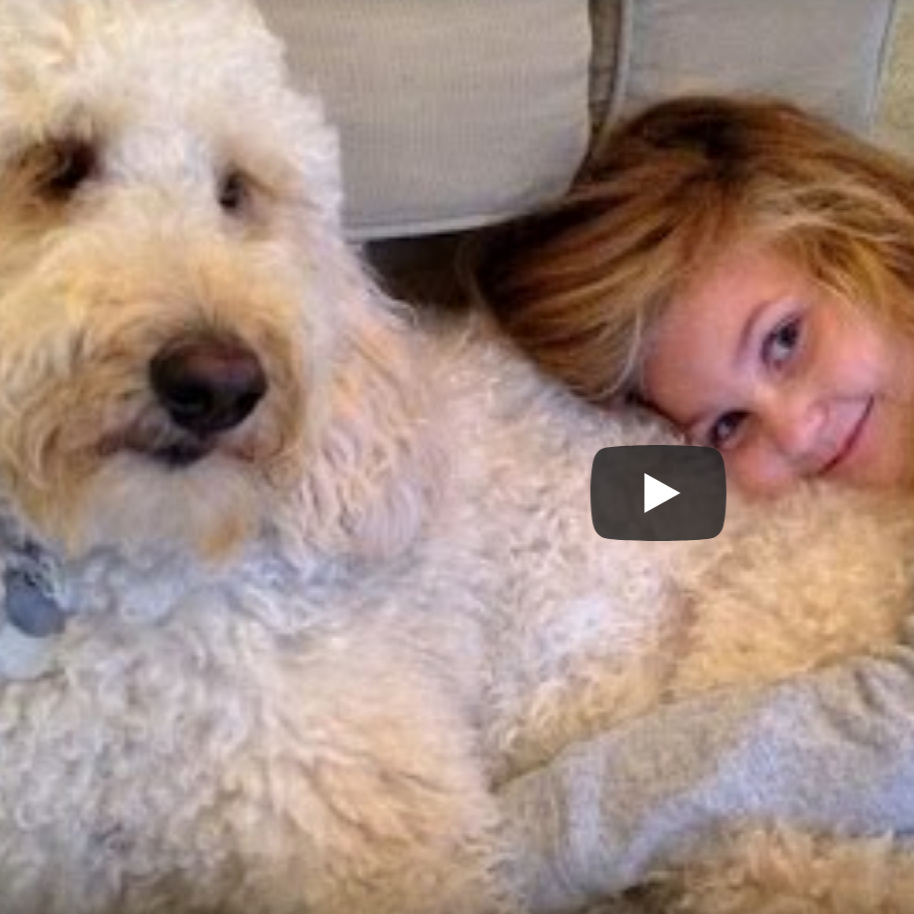 Labradoodle Service Dog Changes Little Girl's Life