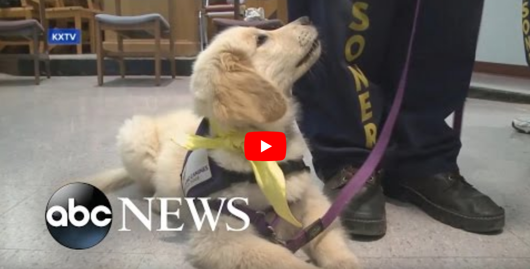 Inmates Train Puppies to Become Service Dogs