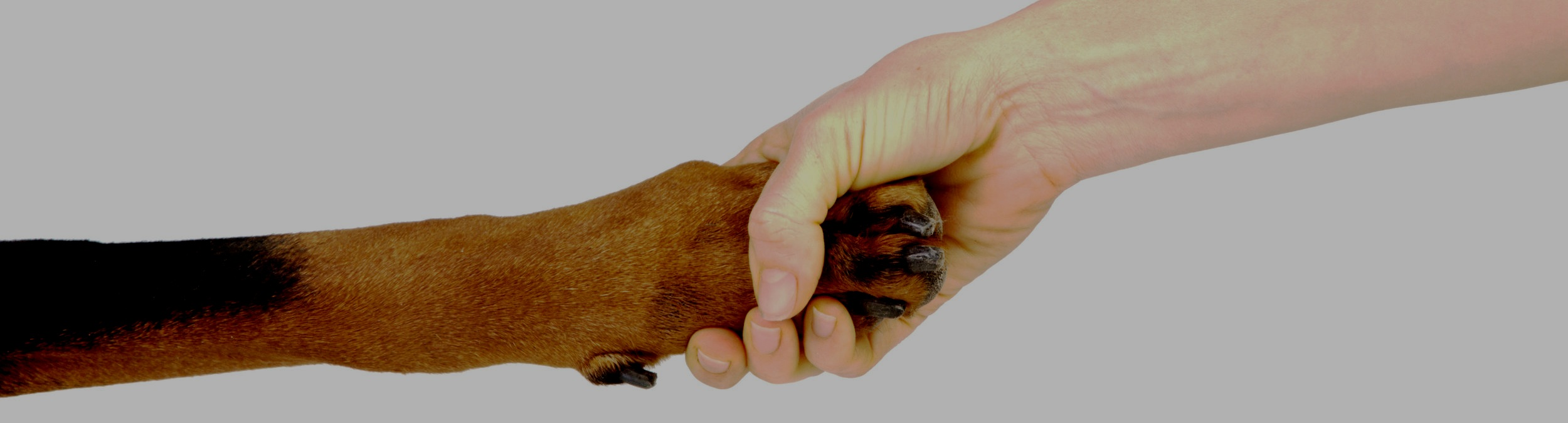 Gift of Stock - You can transfer stock directly through your broker to the account of Tender Loving Canines Assistance Dogs, Inc. (Tax ID: 33-0809688)Wedbush Securities Account # 4611-3332 (DTC #0103)Our representative at Wedbush Securities is Werner Iseli Email: werner.iseli@wedbush.com Telephone: (800) 234-0480