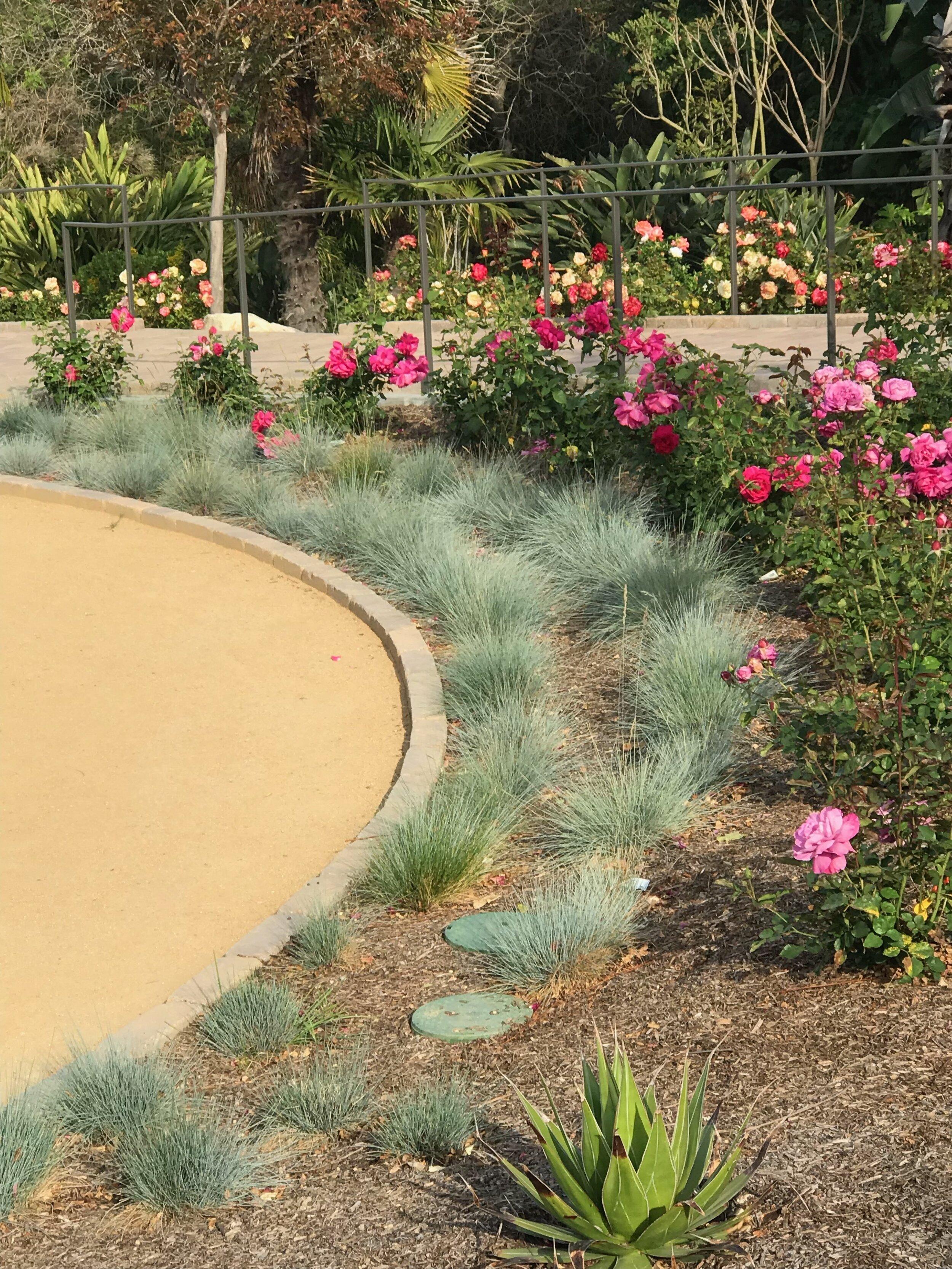 Rose garden at South Coast Botanic Garden, Palos Verdes Peninsula, where the wedding took place