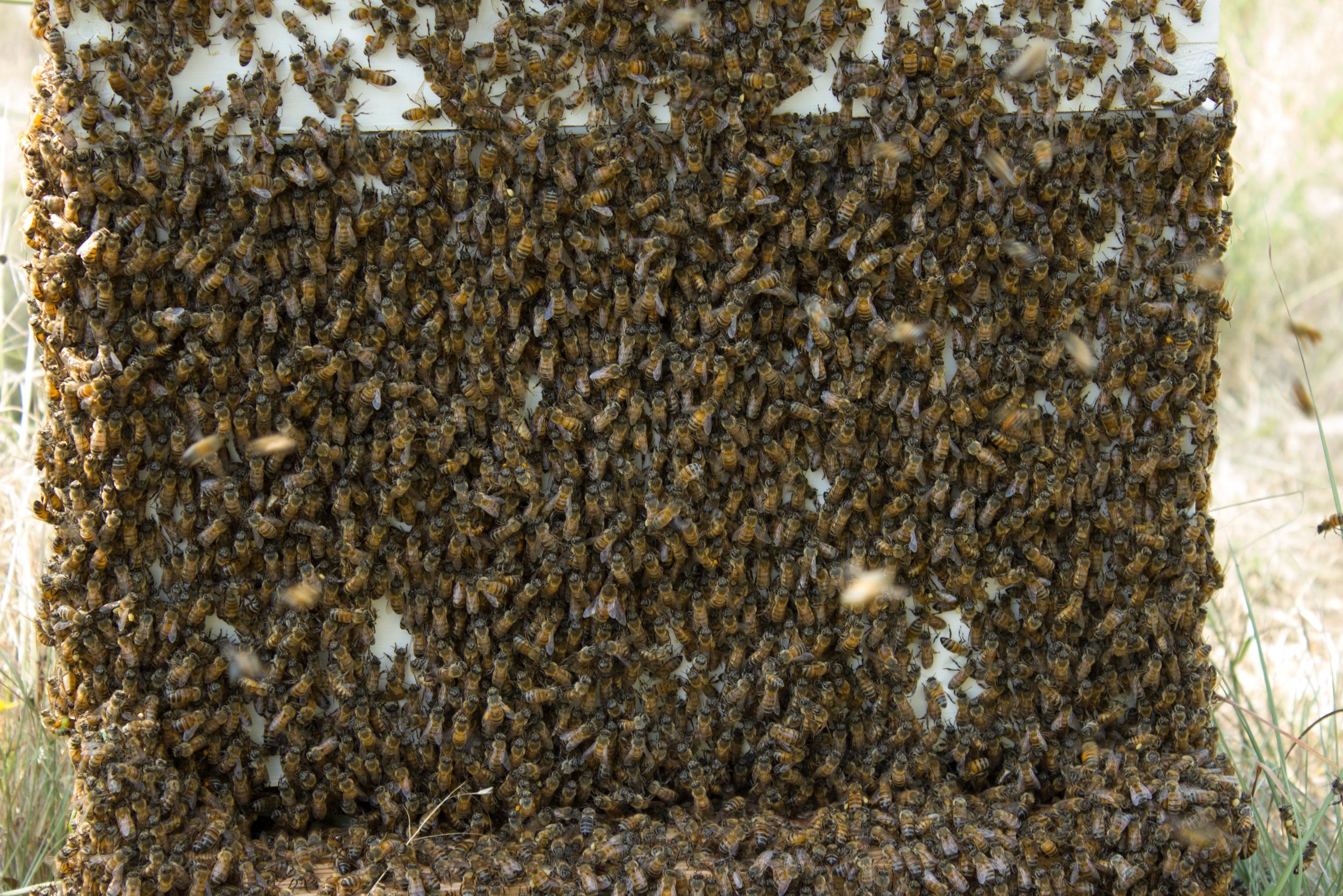 One of the hives after we had lifted every frame out looking for the queen
