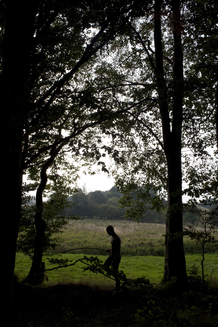 Daniel_van_Flymen_FOREST_011_1.jpg