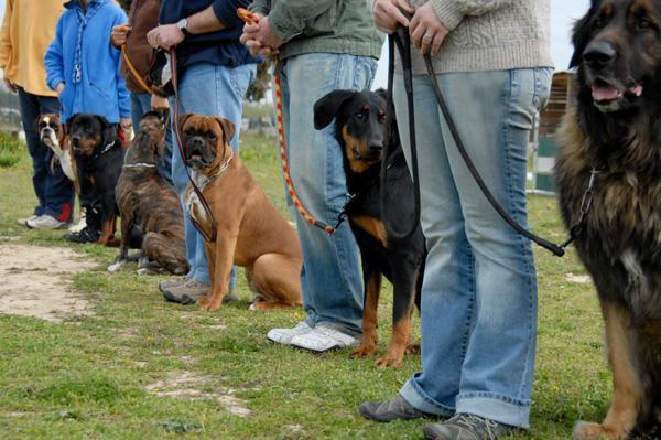 Doggie Daycare - Bloomington/Normal Il