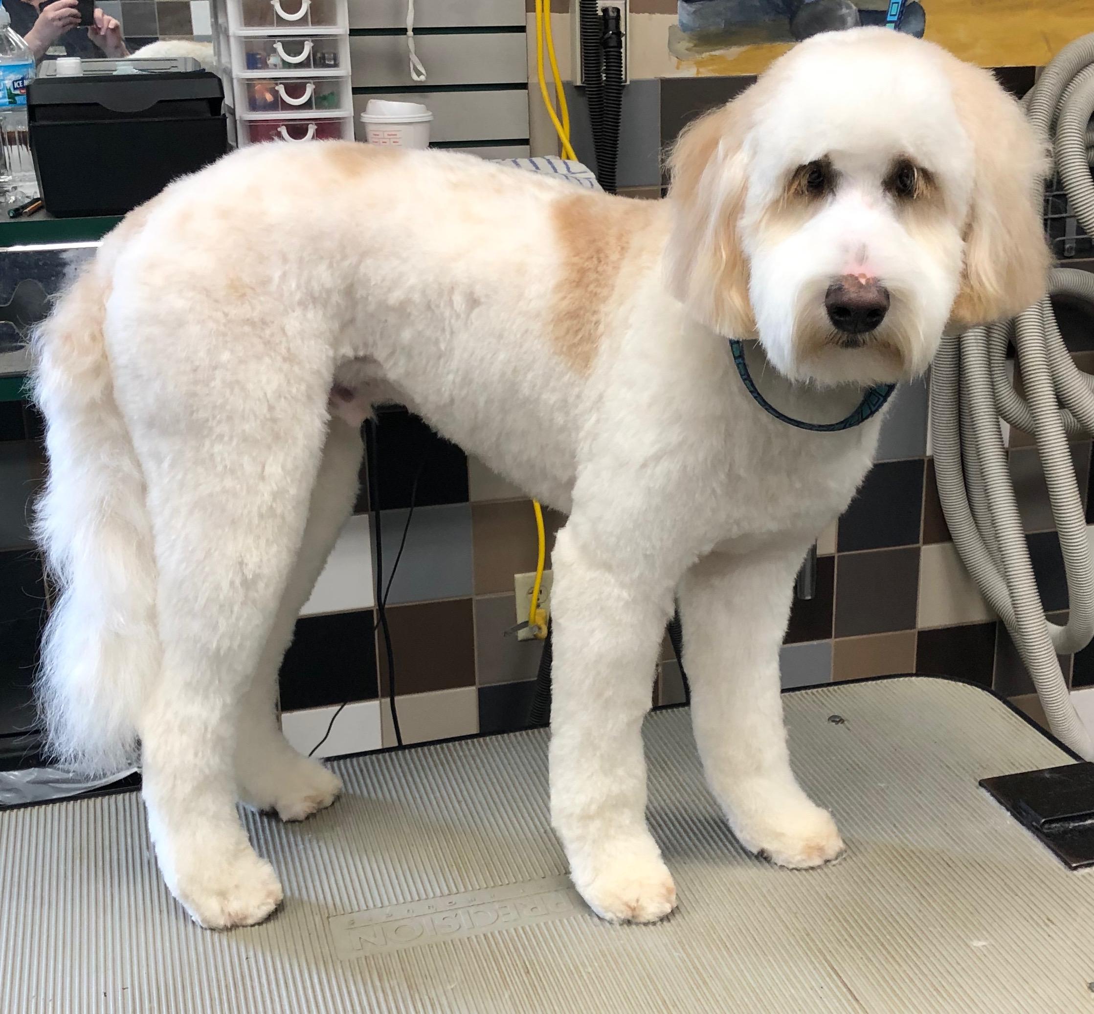 Dog Grooming, Puppy Grooming, Dog Daycare, Dog Boarding, Dog Bath, Dog Nail, Dog Ears, Large Dog Daycare, Doggy Daycare, Small Dog Daycare, Normal Illinois, Bloomington IL