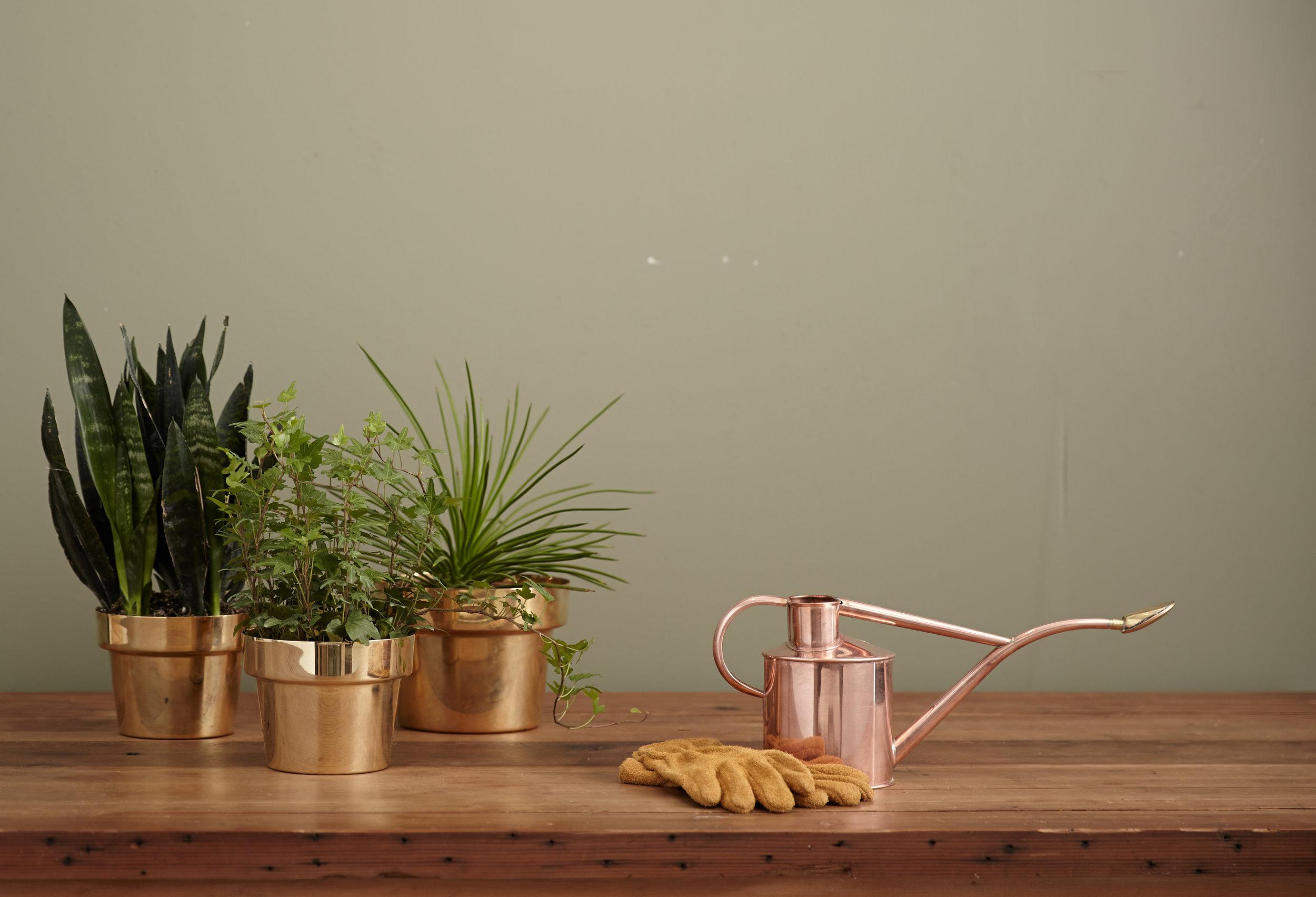 Plantas Mejoran Tu Vida