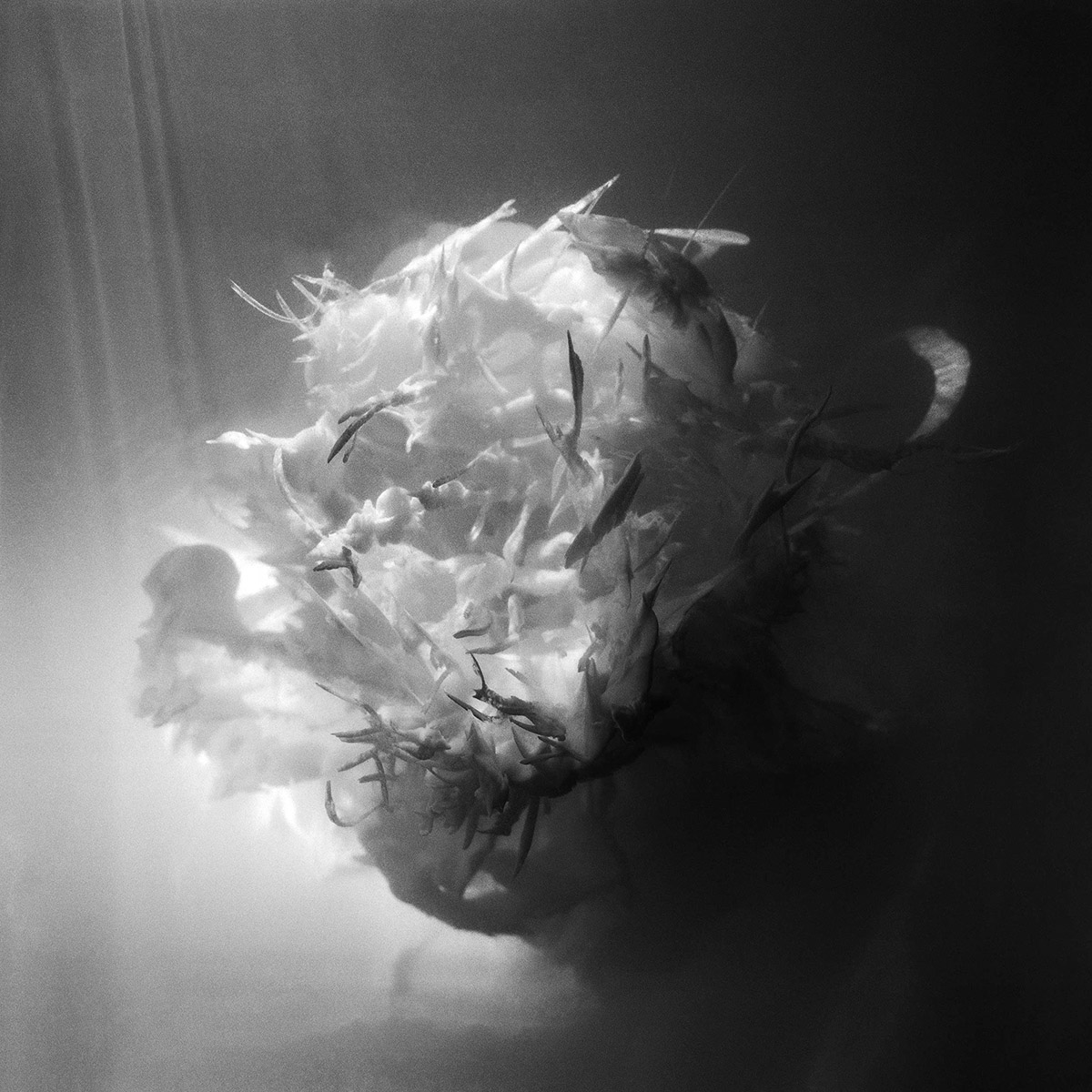 FORMATION (2015)  Ink in gelatine, 120mm photograph 50 x 50 cm  Print edition of 20 on Hahnemuhle Photorag