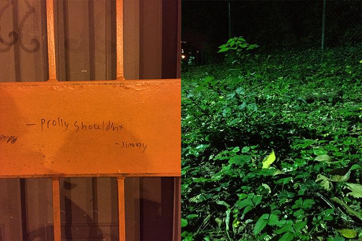 greenplants_jimmy copy.jpg