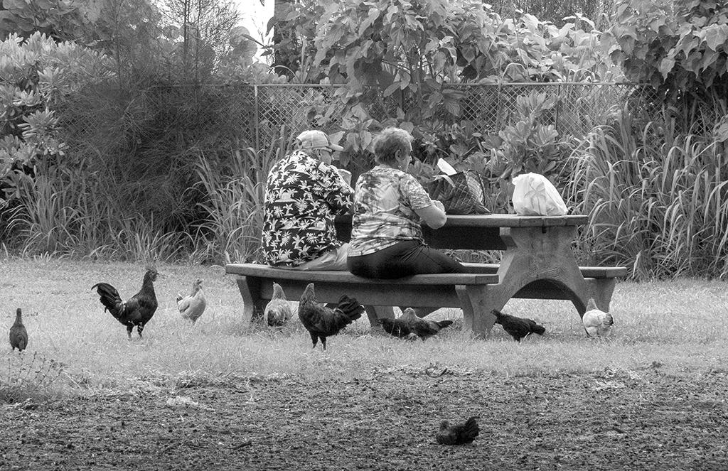 chicken-picnic-sm.png