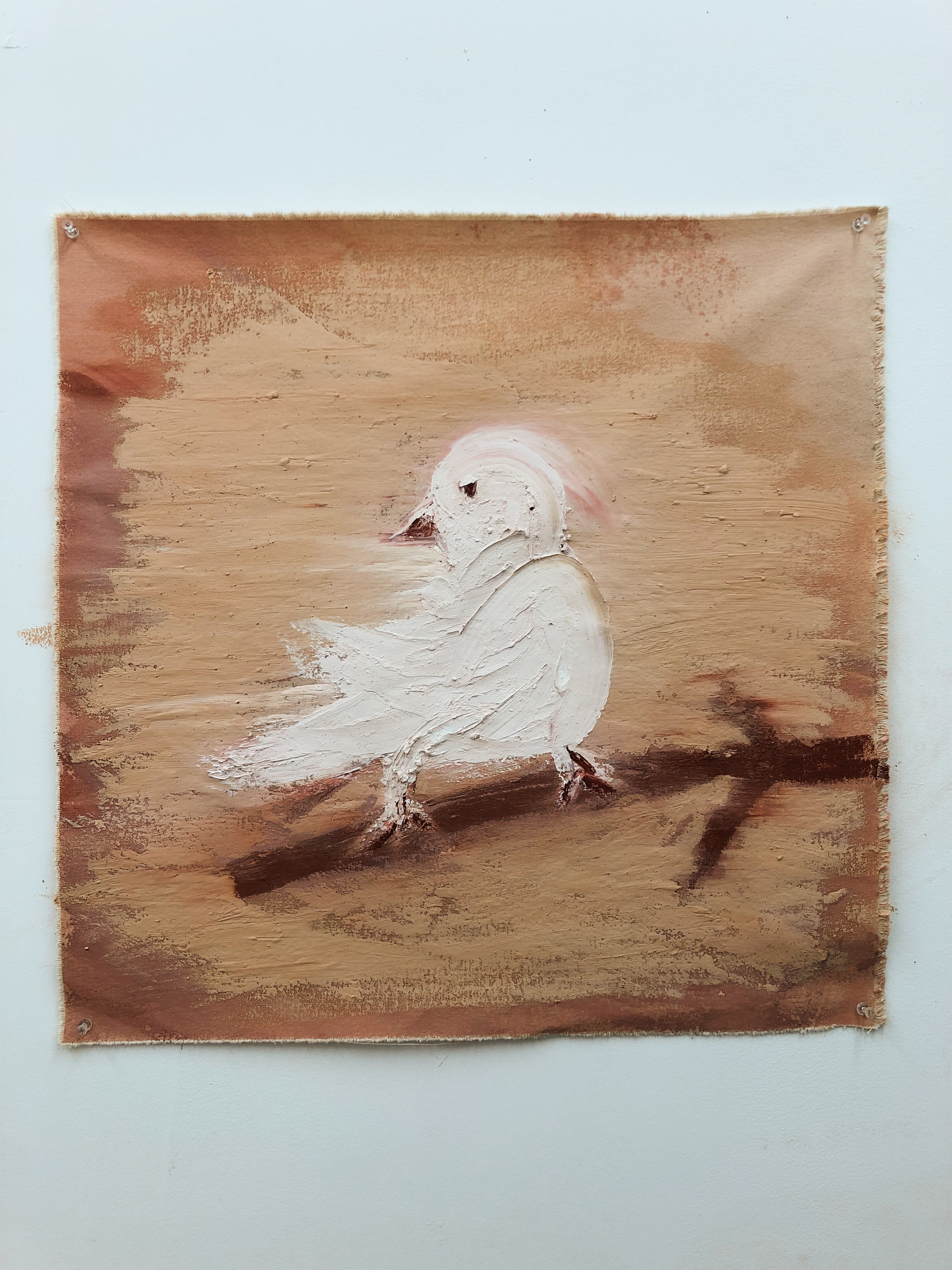 Bird with Albinism