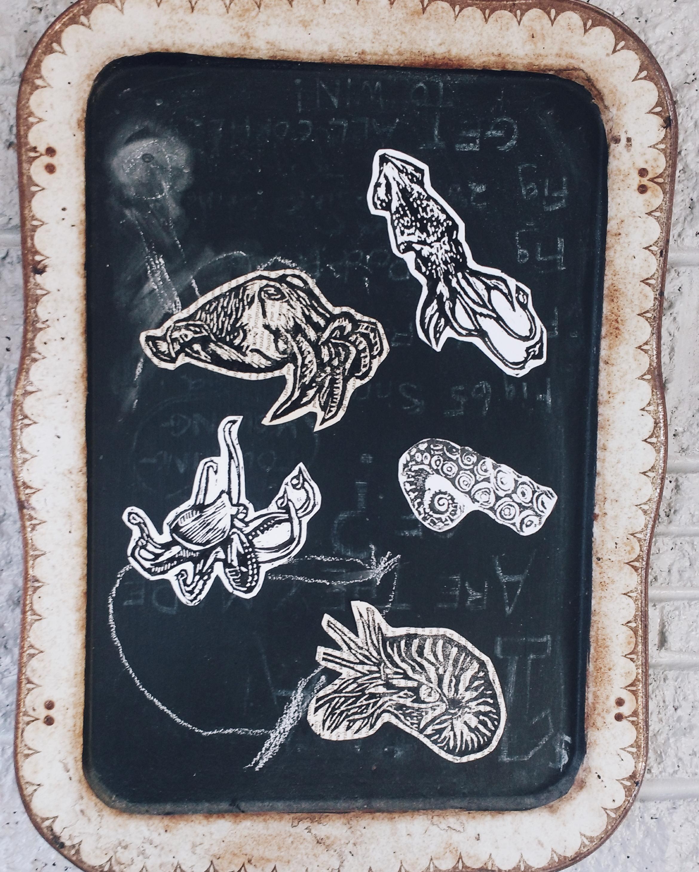 Cephalopods.