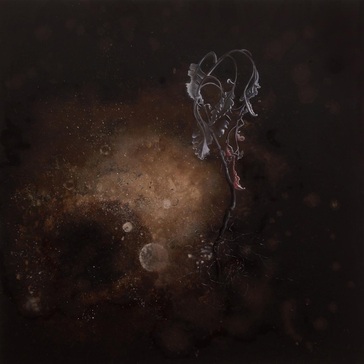 Cirrus , 2014, oil on board, 60 x 60 cm