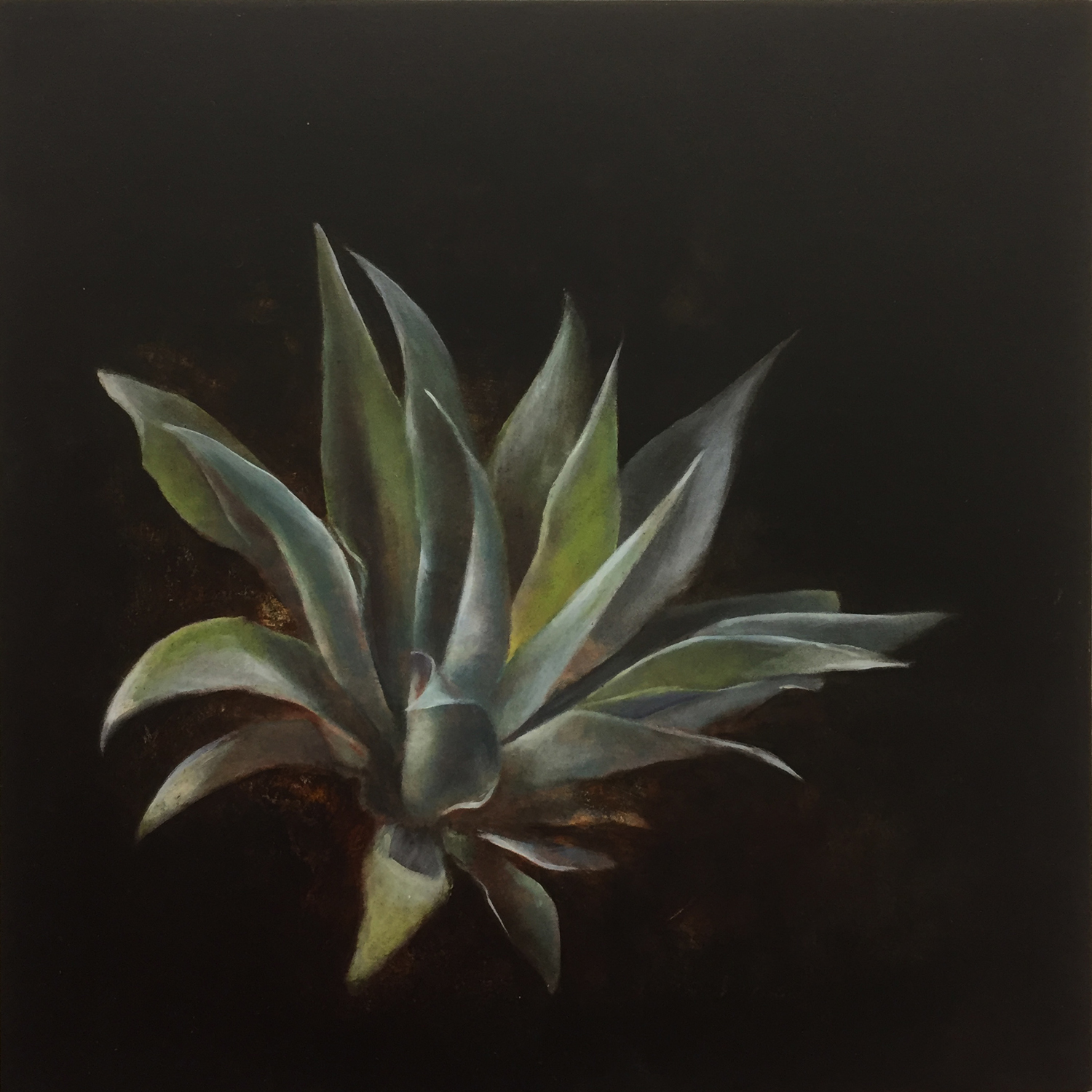 Agave , 2017, oil on board, 25 x 25cm
