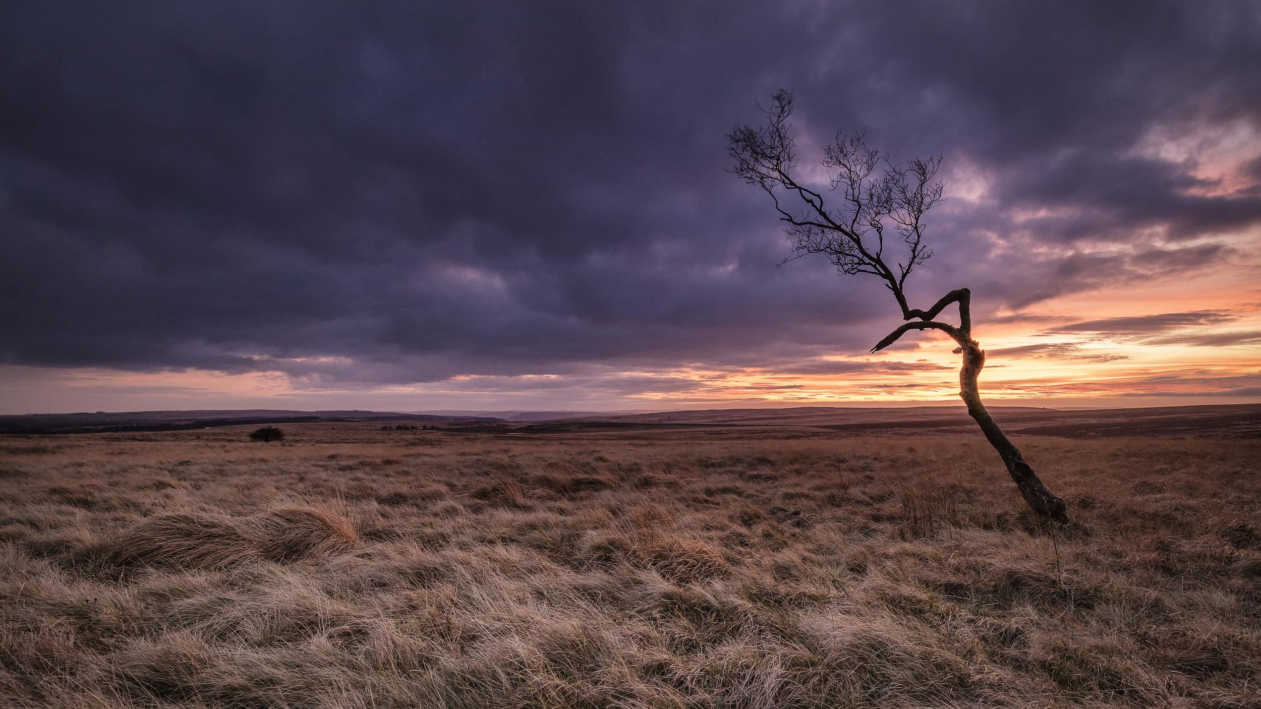 Big Moor Lone Tree Peak District Landscape Photography