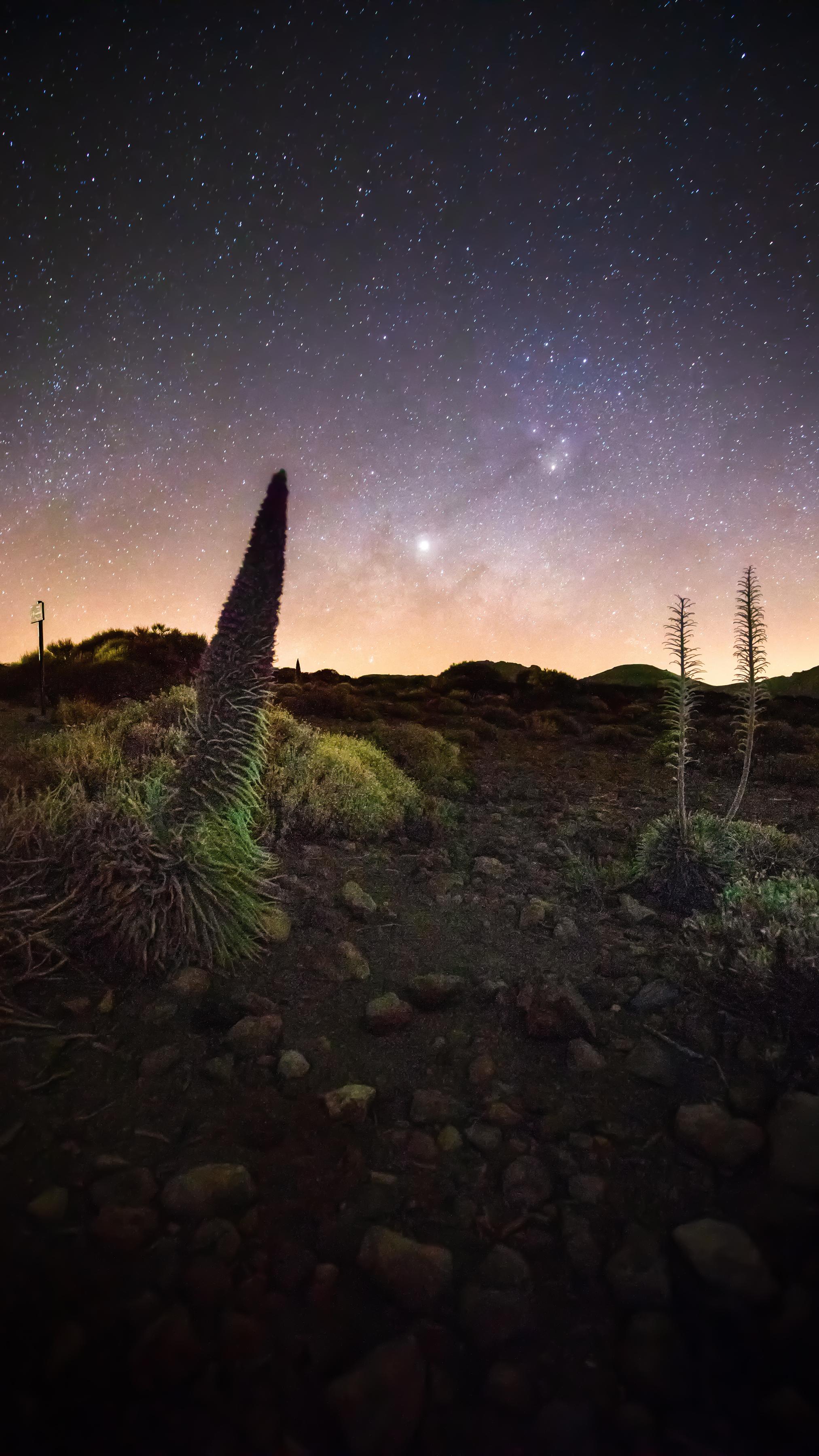 Tajinaste plants and the milky way Tenerife
